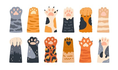 Different cartoon colored cat paws set vector graphic illustration. Collection of various cute cartoon domestic animal foot isolated on white background. Funny fur pet dangerous claws Wall mural