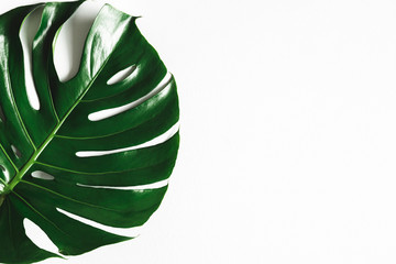 Summer composition. Monstera leaf on white background. Summer concept. Flat lay, top view, copy...