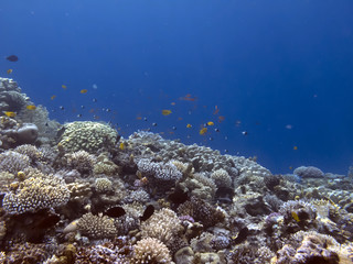Fototapete - The Best Coral Reef Locations: Red Sea are the largest natural structures in the world