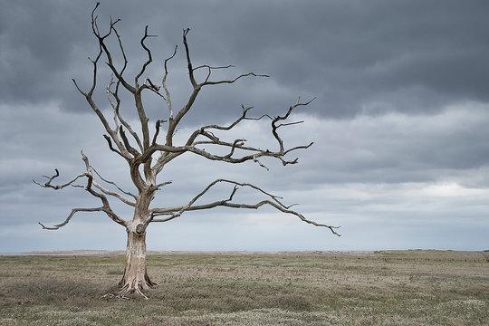 Dead tree in a barren landscape