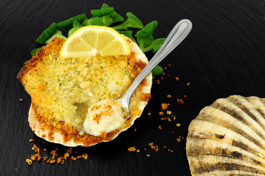 Coquille St Jacques scallop shellfish filled with white wine and cheese cream sauce, topped with breadcrumbs on a slate stone background