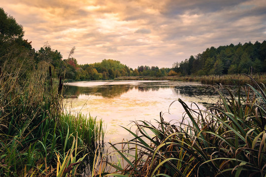 evening landscape. view from the shore through a thick reed to a marshy lake with water and the opposite wooded coast under a cloudy sky
