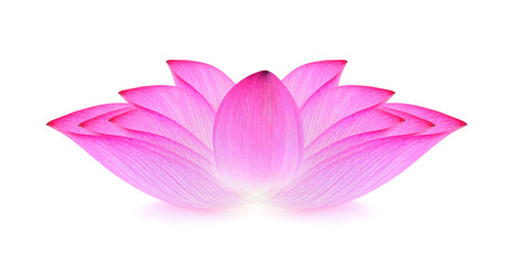 Foto op Plexiglas Lotusbloem lotus isolated on white background.