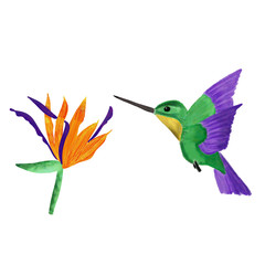 set of humming bird and orange and violet strelitzia isolated on white background. hand drawing. Tropical set