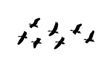 Isolated Group of Birds Flying Graphic Silhouette Wall mural