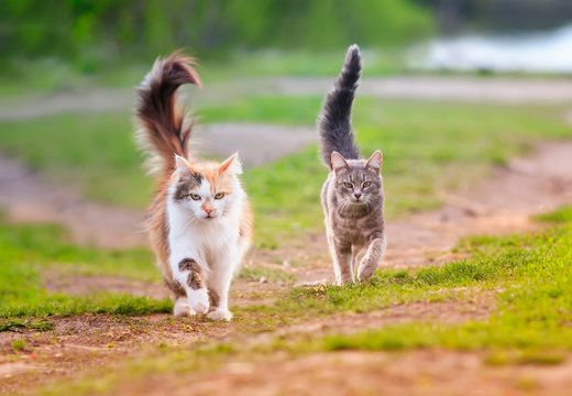 two cats run across a green meadow in may Sunny warm day