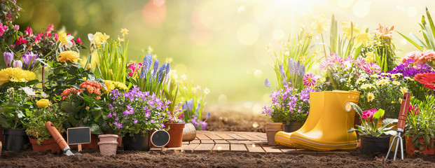 Poster Spring Gardening Concept. Garden Flowers and Plants on a Sunny Background