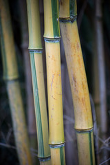 Foto auf Gartenposter Bambusse Closeup of bamboo forest in a public garden