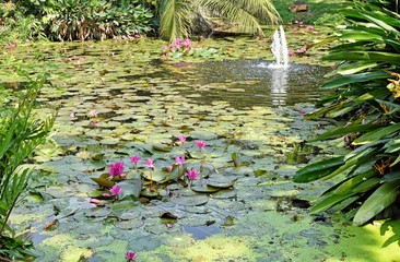 Water lily pond in beautiful garden - Thailand