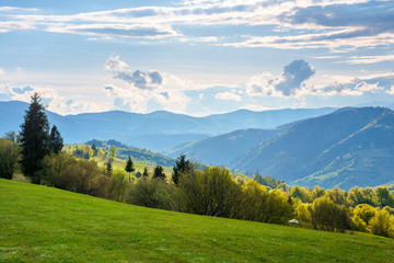 wonderful rural landscape in mountains. fields and meadows on hills rolling in to the distant ridge. trees in fresh green foliage. nature scenery on a sunny day in spring. fluffy clouds on the sky