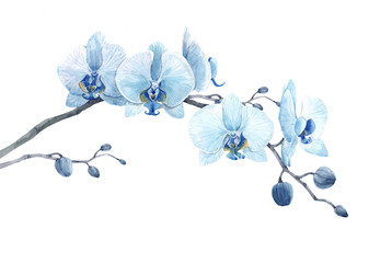 Fototapeta Beautiful floral stock illustration with watercolor blue orchid flower branch. obraz