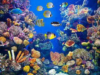 Colorful and vibrant aquarium life Wall mural