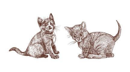 Hand drawn set of British Shorthair kittens. Engraving illustration in vintage style.