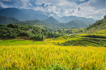 Wall Murals Melon Rice fields on terraced in rainny season at SAPA, Lao Cai, Vietnam. Rice fields prepare for transplant at Northwest Vietnam