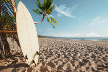 Fototapete - Surfboard and palm tree on beach background with people. Travel adventure and water sport. relaxation and summer vacation concept.