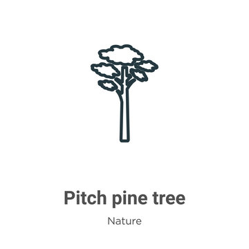 Pitch pine tree outline vector icon. Thin line black pitch pine tree icon, flat vector simple element illustration from editable nature concept isolated stroke on white background