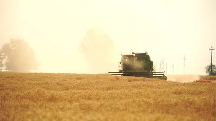 Wall Mural - Combine harvester harvests grain in the field at sunset. Behind him is a cloud of dust. Slow motion