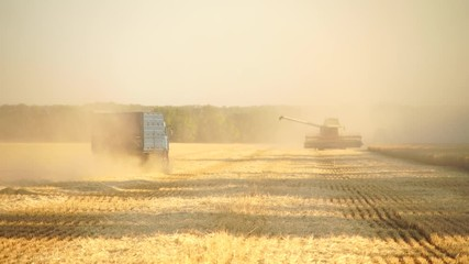 Wall Mural - Harvesting of wheat. Combine harvesters at work. The truck rides on the field. Slow motion