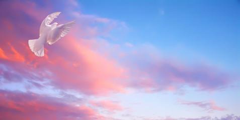 White dove in fly. Bright sunset high sky Fotomurales