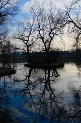 Drzewo na środku jeziora. Śląski Krajobraz Chorzów Dolina Górnika. Przyroda w mieście.