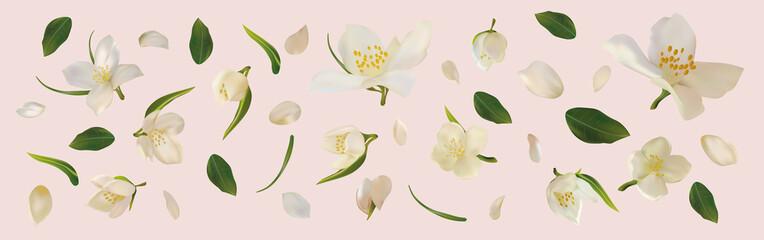 3D realistic jasmine with green leaf. White jasmine flower in motion. Beautiful jasmine closeup. Vector illustration.