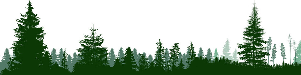 high green fir trees forest panorama isolated on white