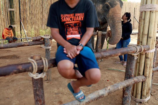 Elephant keepers wait for tourists at empty touristic area, due to fear of coronavirus in Phuket