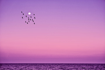 Acrylic Prints Candy pink flock of birds flying near moon above ocean floor in Sun Island, Maldives