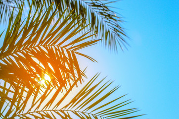 Foto op Canvas Palm boom Palm tree on blue sky