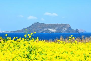 Fotorollo Gelb 제주에 있는 유명한 관광지'섭지코지'의 봄 풍경이다.