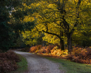 Aluminium Prints Autumn a country track in autumn or fall