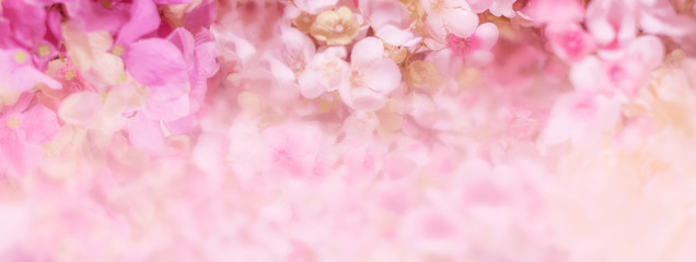 Floral background. Banner with delicate pink flowers Fototapete