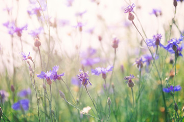 Wall Mural - Wild flowers on sunny meadow in spring