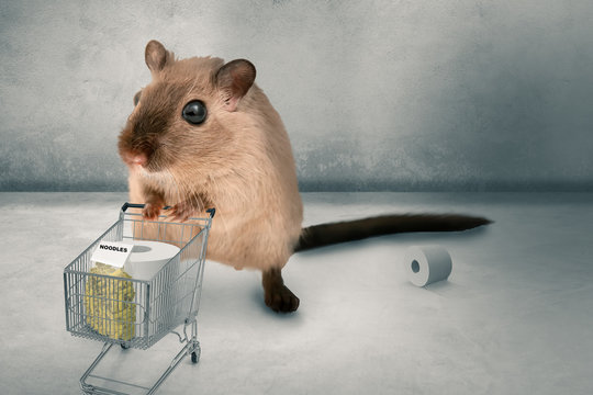 hamster buying in panic the supermarket empty - 3D-Illustration hamster buys pasta and toilet paper in panic 3D-Illustration.
