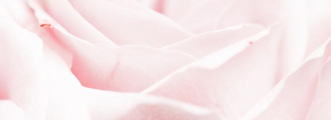 Canvas Prints Floral Tender rose flower in nature, floral art and botanical garden