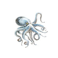blue octopus watercolor illustration on a white background