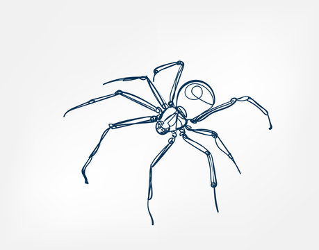 spider vector art line isolated doodle illustration