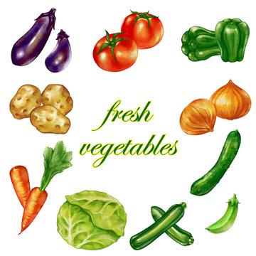 水彩風の複数の新鮮な野菜 盛り沢山 セット