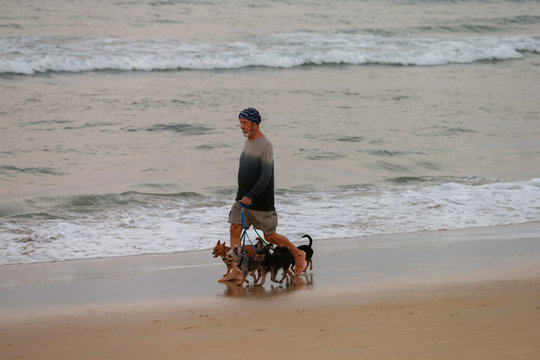 A man walks with his dogs on a beach which is usually full of tourists, amid fear of coronavirus in Phuket