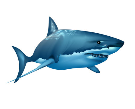 Realistic shark in the ocean on white background. Wall stickers