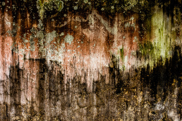 Wall Algae