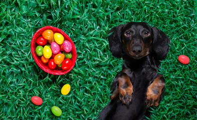 Keuken foto achterwand Crazy dog hapy easter dog with eggs