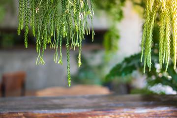 Trends Plants For Modern Home Garden.