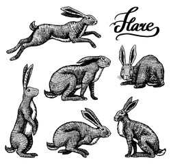 Wild hares set. Rabbits are sitting and jumping. Forest bunny or coney Collection. Hand drawn engraved old sketch for T-shirt, tattoo or label or poster. Vector illustration.