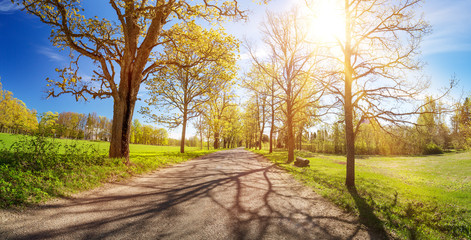 Wall Mural - asphalt road panorama in countryside on sunny spring day