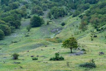 Spoed Foto op Canvas Olijf landscape with trees