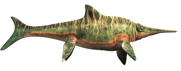 Shastasaurus, an ichthyosaur, and a type of shonisaurus was the largest marine reptile ever. It swam the seas of the Triassic  period. On white. 3D Rendering. Wall mural