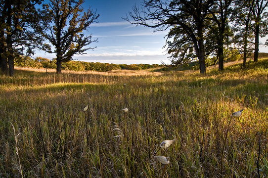 Late afternoon light on an oak savanna and Midwest prairie landscape.