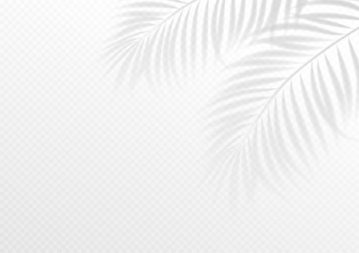 The transparent shadow overlay effect. Tropic leaf. Mockup with overlay a palm leaf shadow. Vector illustration