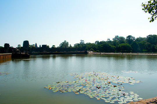 Angkor Wat Siem Reap Cambodia - Water Lillies and Meru Peaks